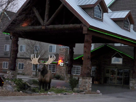 moose-outside-of-Stoney-Cre